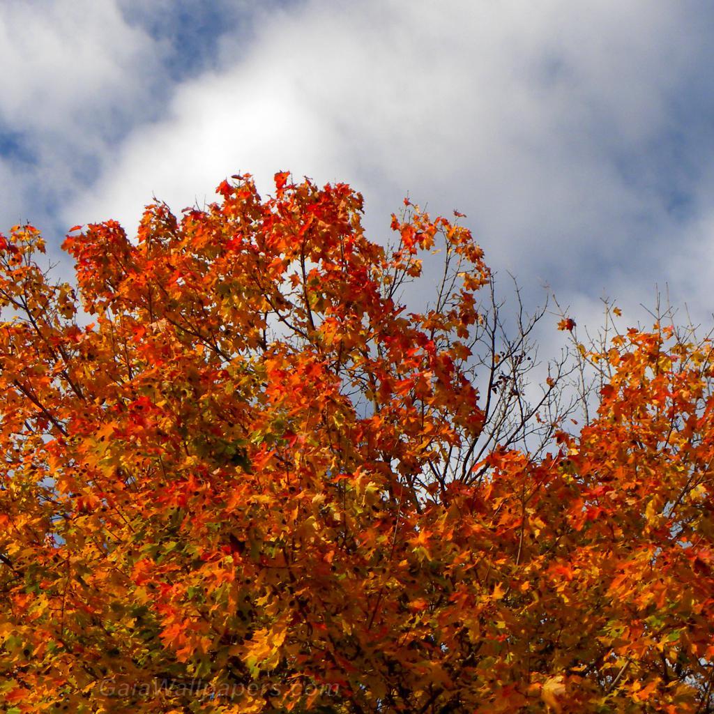 Intense autumn colors - Free desktop wallpapers