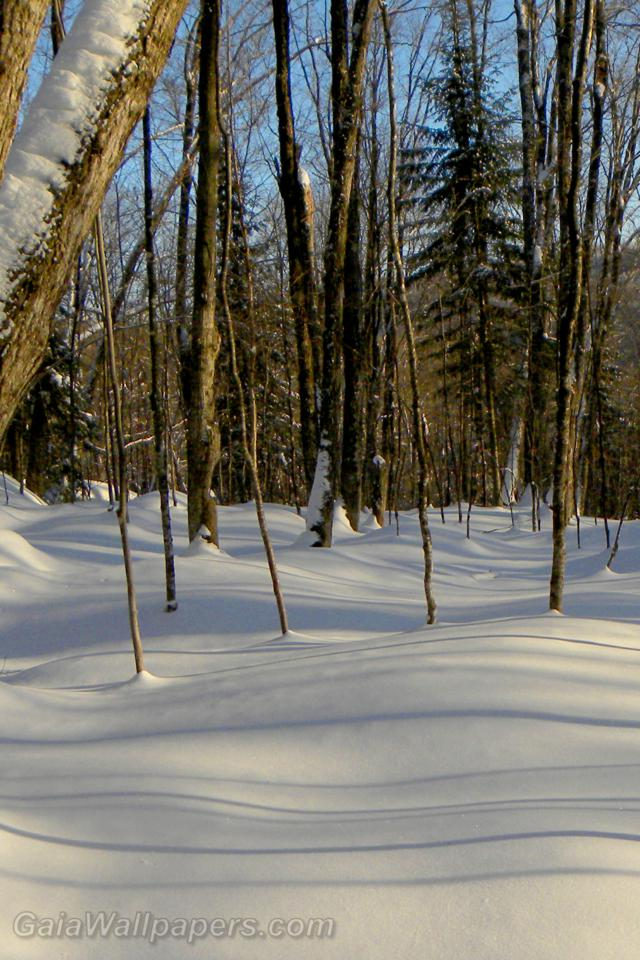Soft snow in the winter forest - Free desktop wallpapers