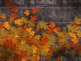 Autumn on the stone wall desktop wallpapers