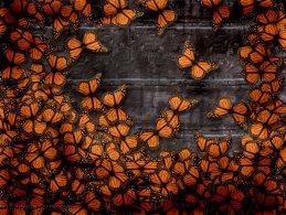 Orange butterflies on the stone wall desktop wallpapers