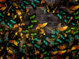 Multi-colored Butterflies on the stone wall desktop wallpapers