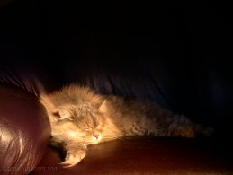 Sleeping cat desktop wallpapers