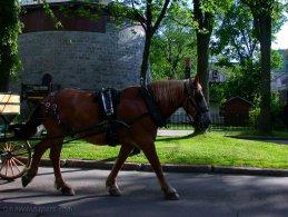Horse in Quebec city desktop wallpapers