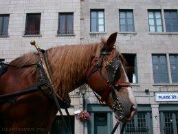 Horse in town desktop wallpapers