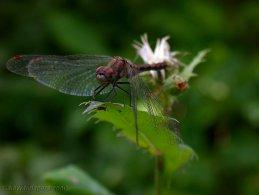 Dragonfly relaxing desktop wallpapers