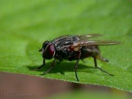 Flies desktop wallpapers