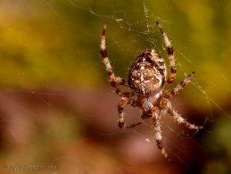 Spider desktop wallpapers