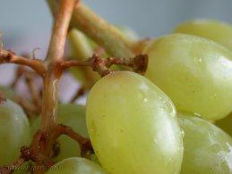 Grapes desktop wallpapers