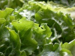 Green salad desktop wallpapers