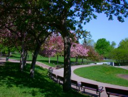 Park in spring at the Mount Royal desktop wallpapers