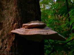 Mushroom on a tree desktop wallpapers