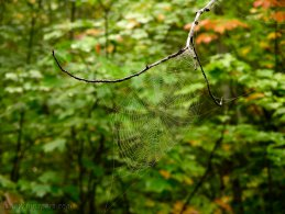 Spider webs desktop wallpapers
