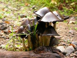 Mushroom city desktop wallpapers