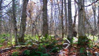 Last ferns alive in the forest desktop wallpapers