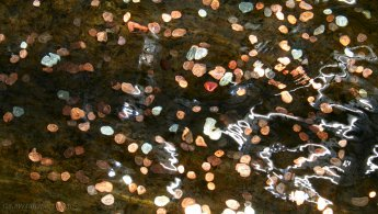 Coin distortion desktop wallpapers