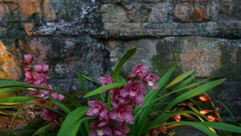 Orchidées fonds d'écran