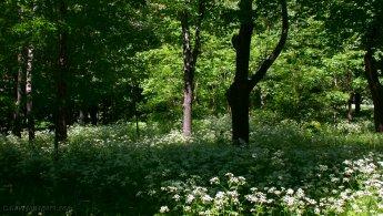 Spring Forest at Mount Royal desktop wallpapers