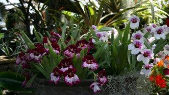 Orchids desktop wallpapers