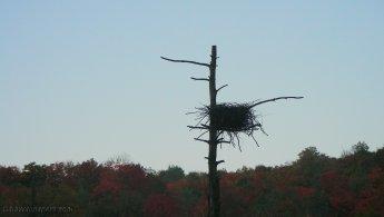Large abandoned bird nest desktop wallpapers
