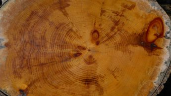 Tree-ring growth patterns desktop wallpapers