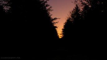 Dawn rising between the trees desktop wallpapers