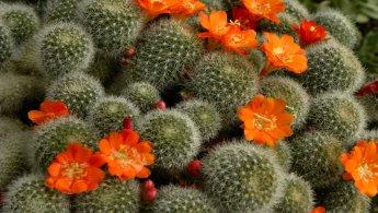 Cactus desktop wallpapers