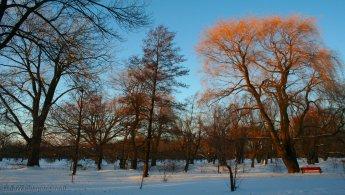 Park in winter desktop wallpapers
