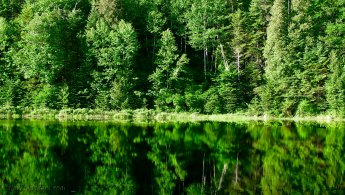Green forest water reflection wallpapers - Free Desktop