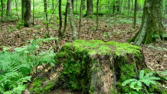 Old tree stump desktop wallpapers