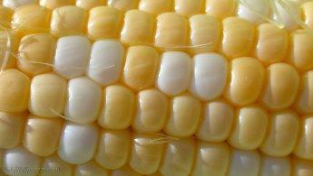 Corn pattern desktop wallpapers