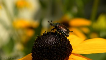 Insect on top a flower desktop wallpapers