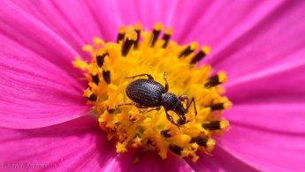 Little beast in the pollen desktop wallpapers
