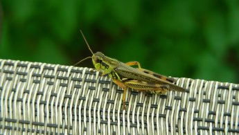 Grasshopper on a chair desktop wallpapers