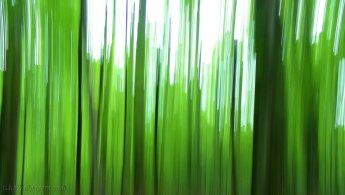 Distorsion vert forêt fonds d'écran gratuits