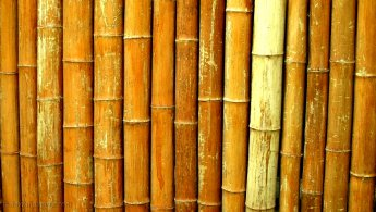 Wall of bamboo desktop wallpapers