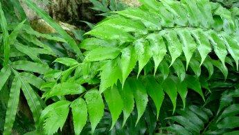 Real green plants desktop wallpapers