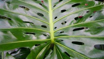 Plant leaf with holes desktop wallpapers