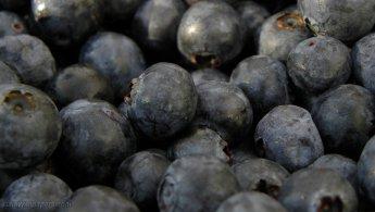 World of blueberries desktop wallpapers