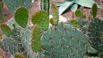Sharp needles on cactus desktop wallpapers