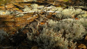 Old ground covered with lichens desktop wallpapers
