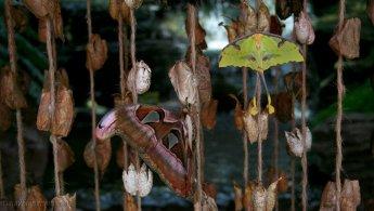 Moths breeding desktop wallpapers