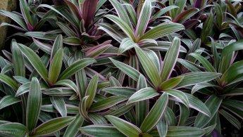 Plants desktop wallpapers