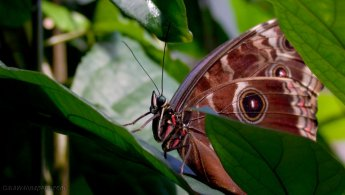 Beautiful butterfly hiding behind the leaves desktop wallpapers