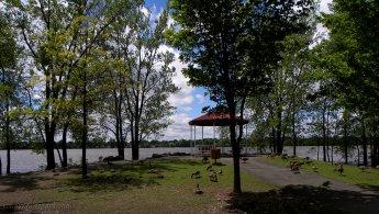 Bernaches du Canada dans un parc en bord de rivière fonds d'écran gratuits