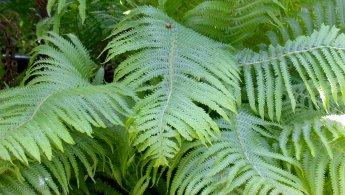 Ferns in the garden desktop wallpapers