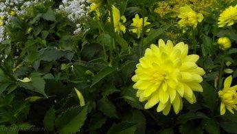 Flowers like little shiny suns desktop wallpapers