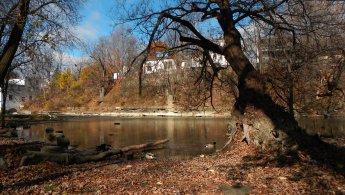Ducks on the river before winter desktop wallpapers