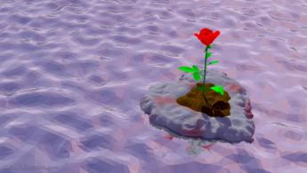 Rose of love drifting on the sea desktop wallpapers